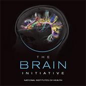 brain-brochure