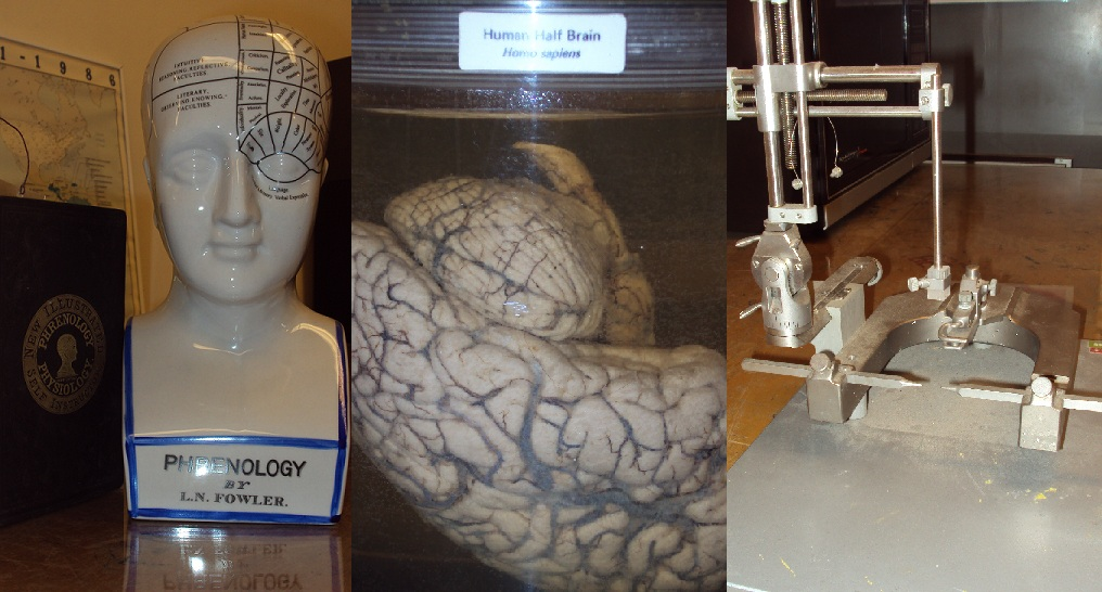 Left: A model and guidebook instructing one on how to determine behavioral characteristics from studying various dimensions of the skull. Thankfully, phrenology is no longer practiced!  Center: The human brain in formaldehyde.  Right: Stereotaxic instrumentation used to create lesions at specific coordinates in the rat brain.